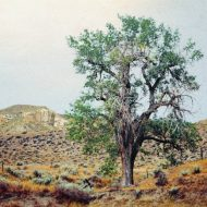 Original Tree Photography by Chuck Levey | Documentary Art on Paper | Tree, Montana